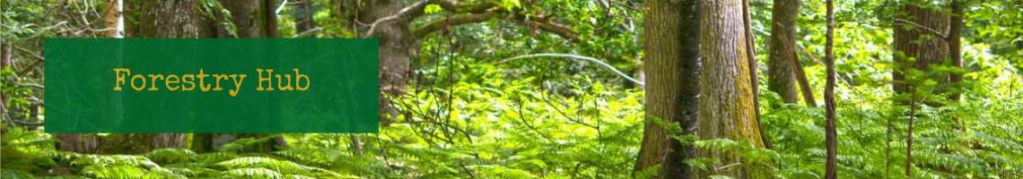 Forestry Hub